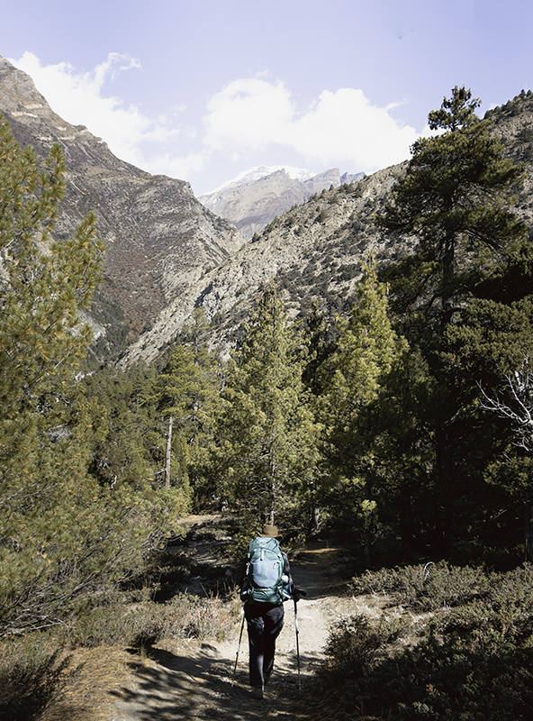 A trekker on a tree-lined trail on the Annapurna Circuit