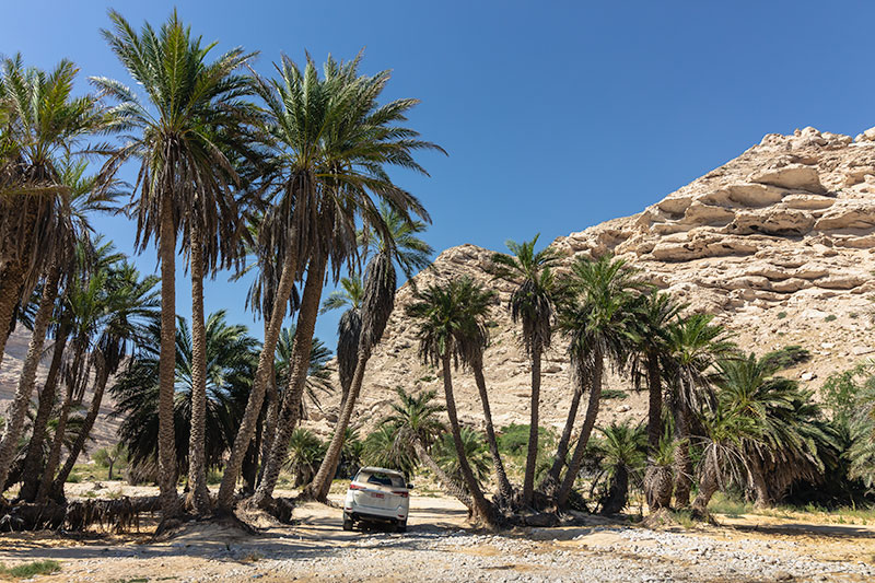 The 4WD rolls under the tall pines, leaving wadi Suneik in Oman, one of the best campsites in Oman.