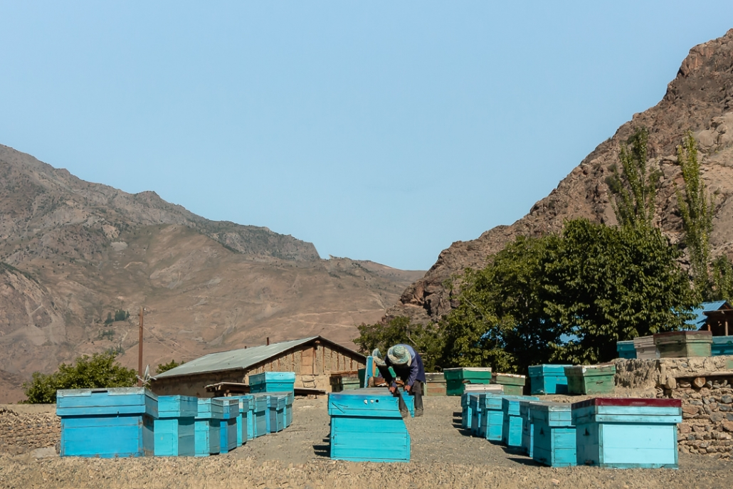 A beekeeper in the village of Guitan in Tajikistan's Fann Mountains tending to his bees.