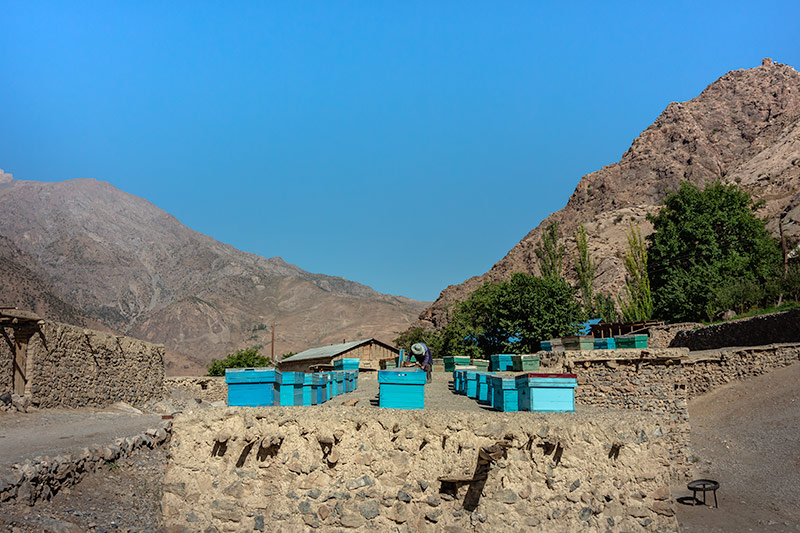 Independent Trekking In The Fann Mountains, Tajikistan: Haft Kul to Alauddin - Bees, bees, bees - a beekeeper hard at work in the village of Guitan