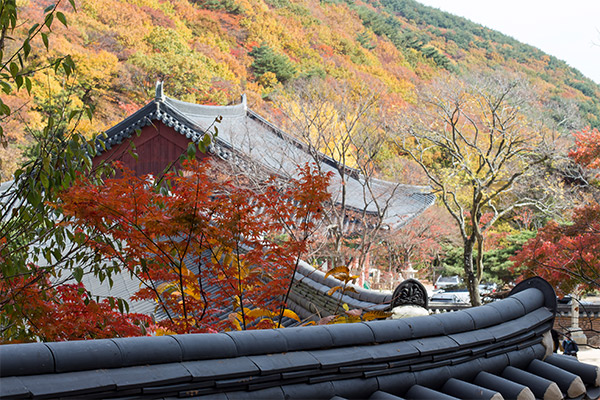 Busan City Guide: Colourful leaves on the hillside at Beomeosa Temple