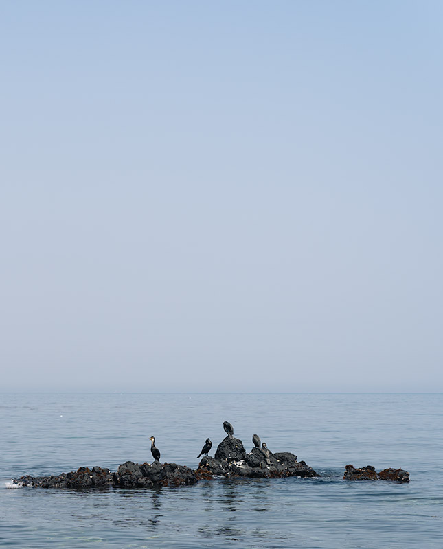 Black Cormorants on a rock in the sea off of Udo Island