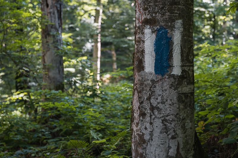 Blue and white painted waymarkings on tree trunks, showing the way on the Black Rock Lake trek in Lagodekhi National Park