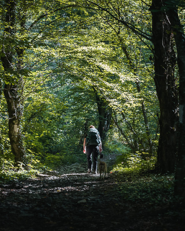 A hiker and dog walk through sun-dappled forest on the first, flat part of the Black Rock Lake trail in Lagodekhi National Park