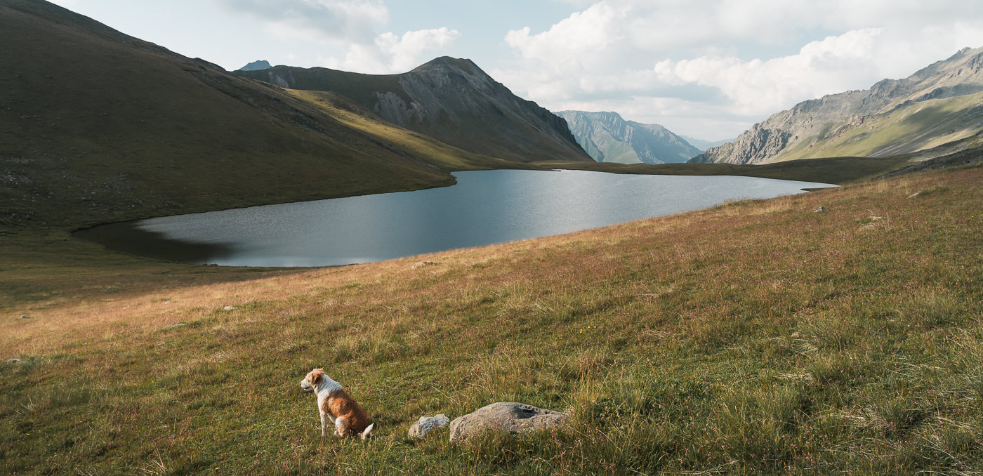 A dog sits on the hillside above Black Rock Lake in the late afternoon sun