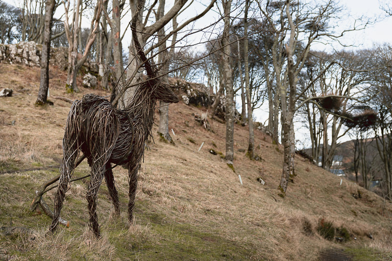 A wicker stag on the grassy hillside at the edge of the trees, part of the Art in Nature installation near Calgary Bay on the Isle of Mull.