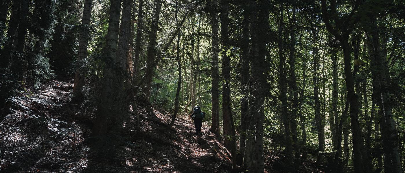 A hiker climbing a steep trail through sun-dappled forest on the Chuberi to Mestia section of the Transcaucasian Trail in Svaneti, Georgia