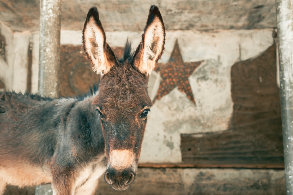 A curious donkey in front of an old Soviet bus stop in the Wakhan Valley in Tajikistan