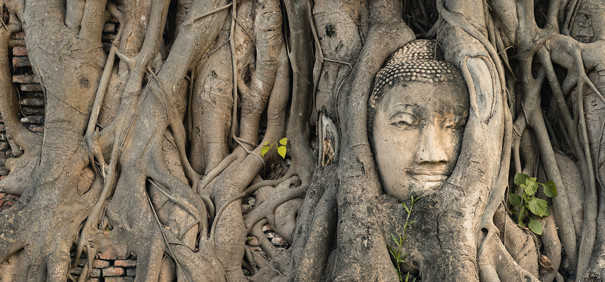 A carved Buddha's head entwined in a banyan tree in Ayutthaya, Thailand