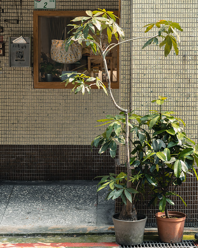 Two potted plants stand in the sun before a penny tile covered wall in Dadaocheng, Taipei's oldest neighbourhood