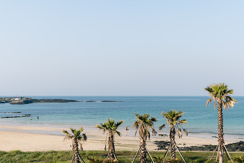 Palm trees line the foreground, with Hagosudong Beach and the sea in the background. This is one of the best beaches on Jeju Island.