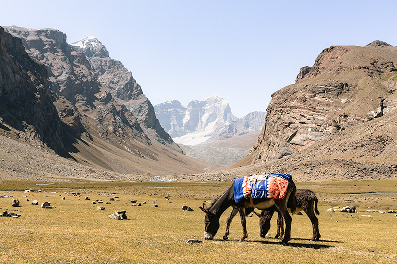 Two donkeys chew on the grass of Peak Engels Meadow, high above the Wakhan Valley