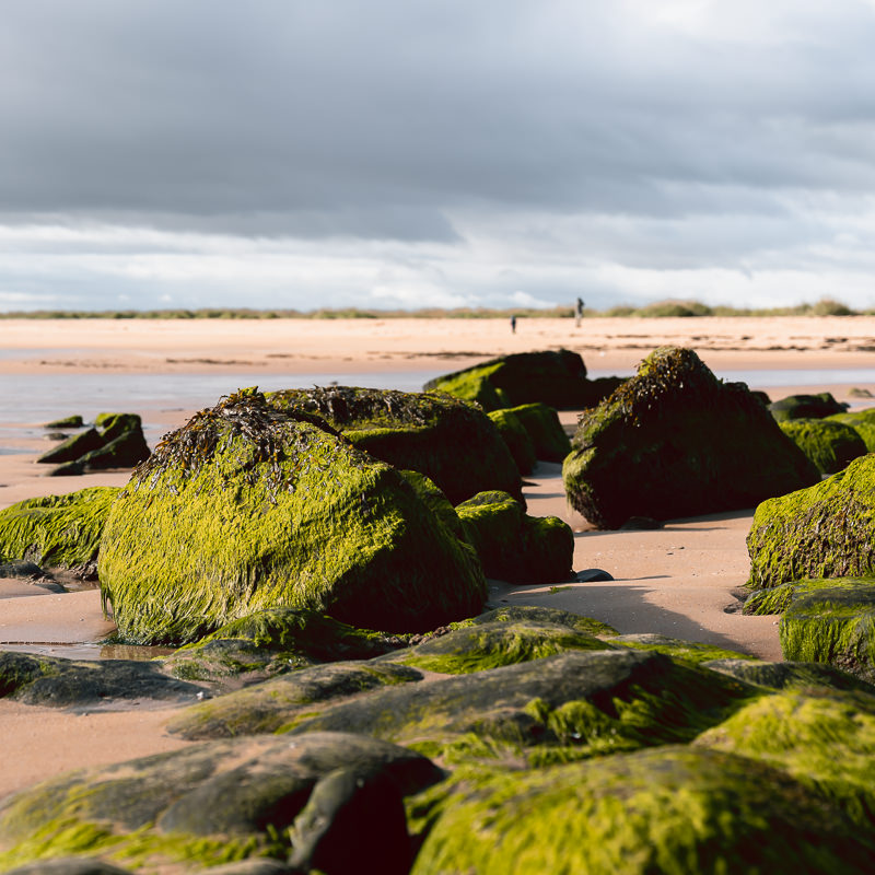 Seaweed draped rocks glowing in the sun at low tide on Dornoch Beach, one of the key east coast attractions on Scotland's North Coast 500 route.