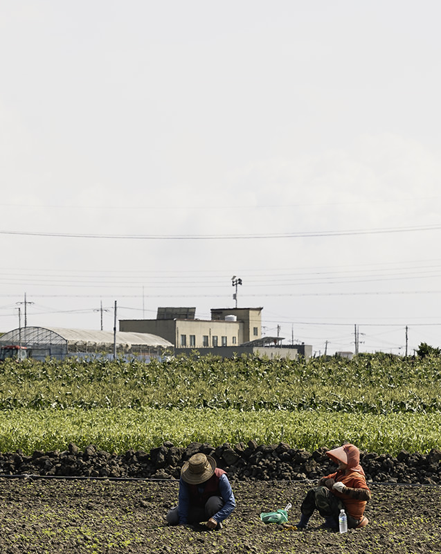 Farm workers resting in the fields on Jeju Olle Trail Route 15-B