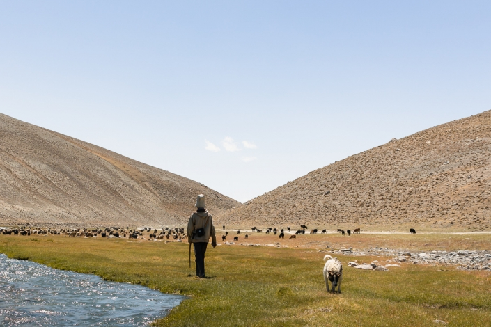 A Kyrgyz goatherder and his dog walking on grass next to the Istyk River near Jarty Gumbez in eastern Tajikistan