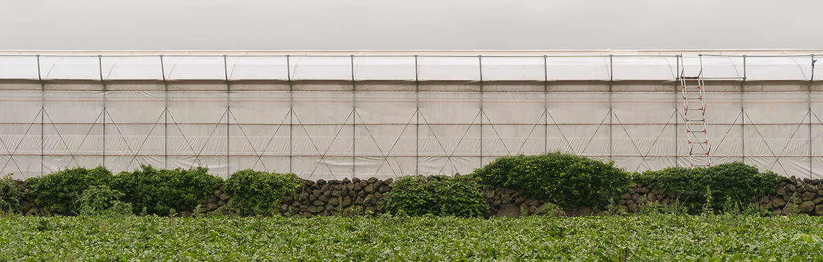 A greenhouse and green field inland on Jeju Island