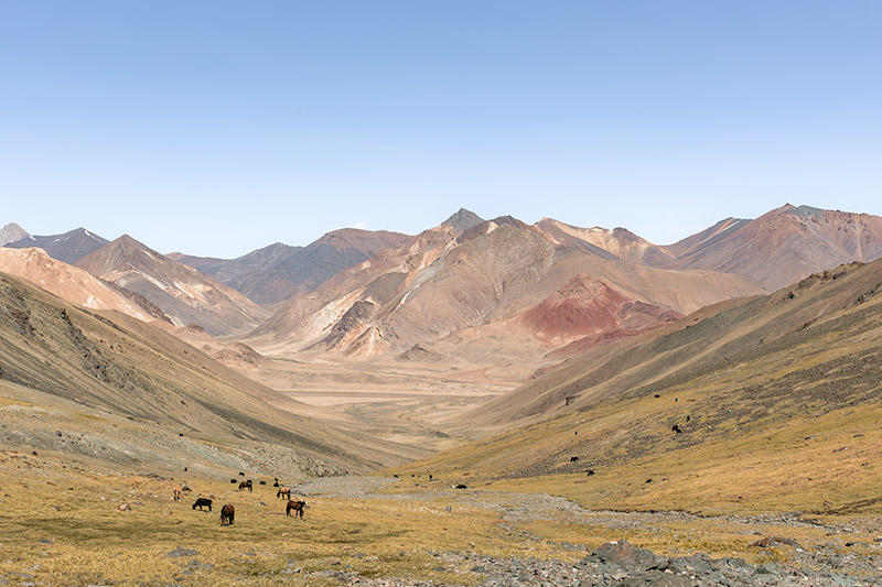 Horses grazing on green grass, the colourful mountains of the Pshart Valley in the distance