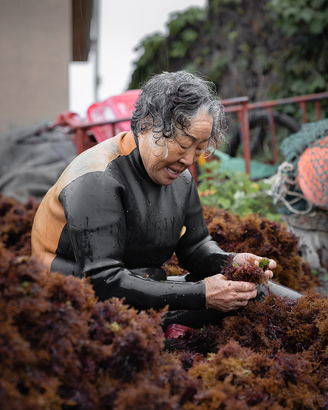 An elderly Jeju haenyeo, or female free diver, sorts through her seaweed catch by the shore