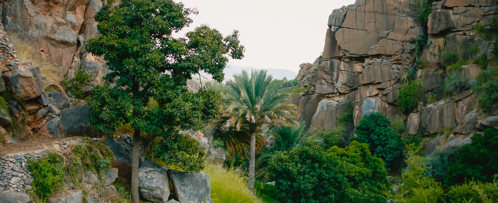 Vegetation filled wadi below Misfat Al Abriyeen