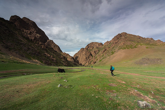 Budget Gobi Tour: Trekking past a yak in Yolyn Am valley, the Gobi, Mongolia