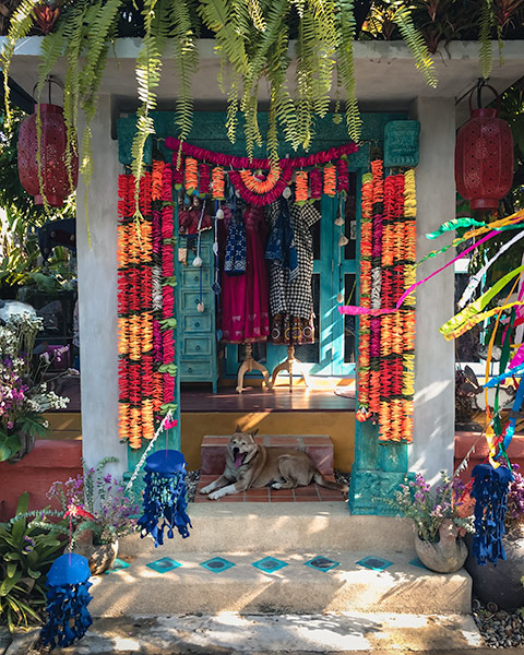 A dog rests in the shaded doorway garlanded by Songkran decorations at the Chamchaa market around Chiang Mai