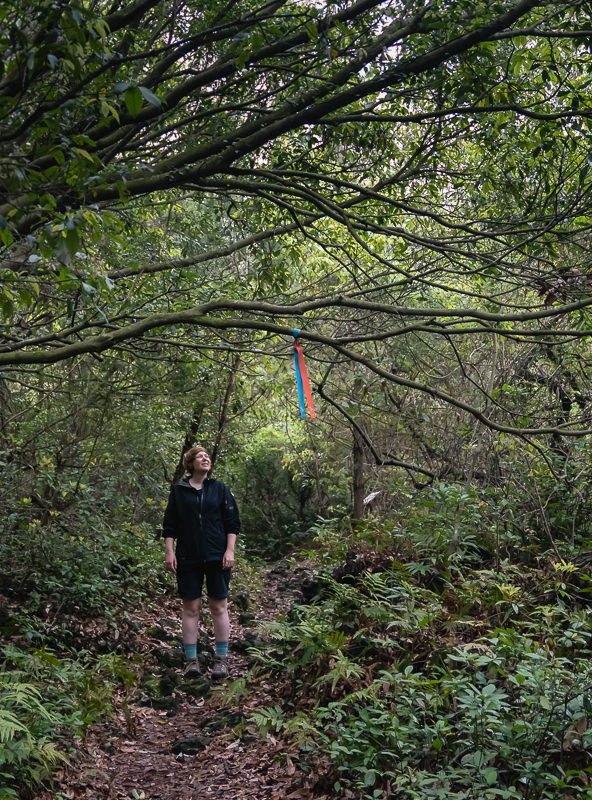 A person stands looking up at the red and blue trail markers in the Gotjawal dense forest on Jeju Olle Route 11