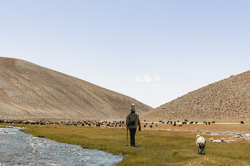 A Kyrgyz herder and his dog follow about 100 goats alongside the banks of the Isstyk River at Jarty Gumbez in the Pamirs of Tajikistan