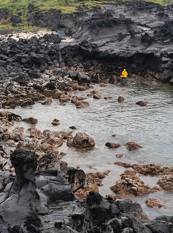 A person with a yellow raincoat is collecting seaweed in the rain by some black volcanic rocks on Jeju Island, South Korea