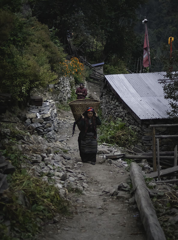 A woman carrying a wicker basket with a head strap in the village of Lho on the Manaslu Circuit