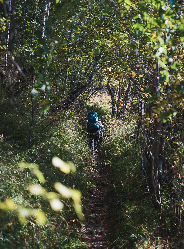 A hiker on a narrow sun-dappled forest trail on the final day of the Mestia to Ushguli trek
