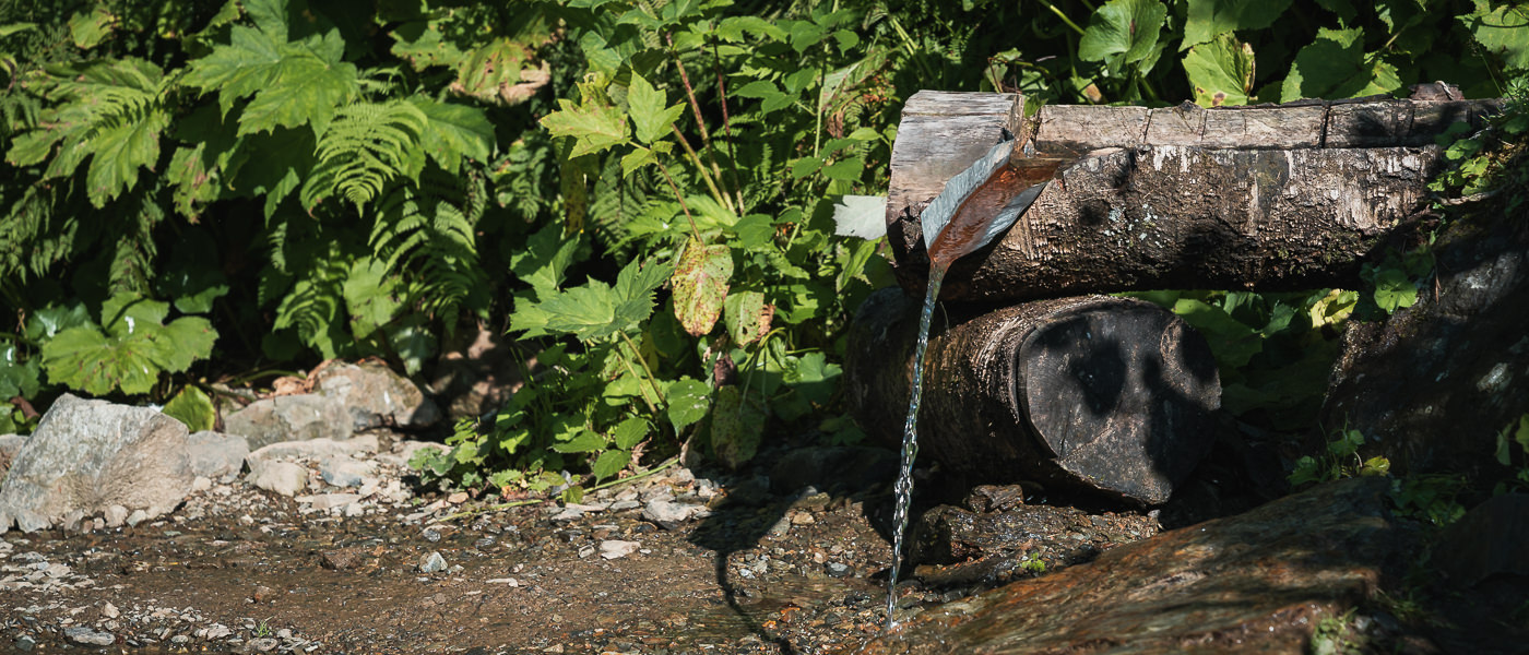 Spring water coming from a hollowed out log near Meteo Shelter on the Black Rock Lake trail