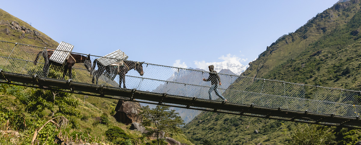 Mules crossing a suspension bridge while carrying the parts for another bridge