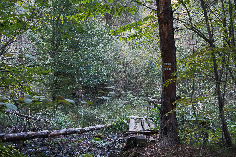 A small wooden bridge crosses a stream in the forest on Day 2 of the Panorama Trail in Borjomi-Kharagauli National Park