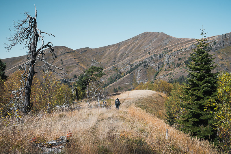 A hiker walking the grassy ridge on Day 2 of the Panorama Trail in Borjomi-Kharagauli National Park