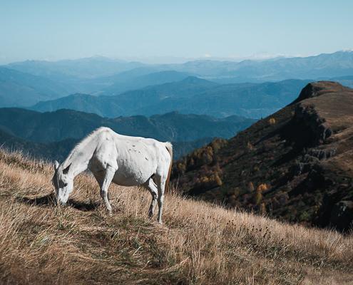 A white horse grazing on the grassy slopes of Borjomi-Kharagauli National Park