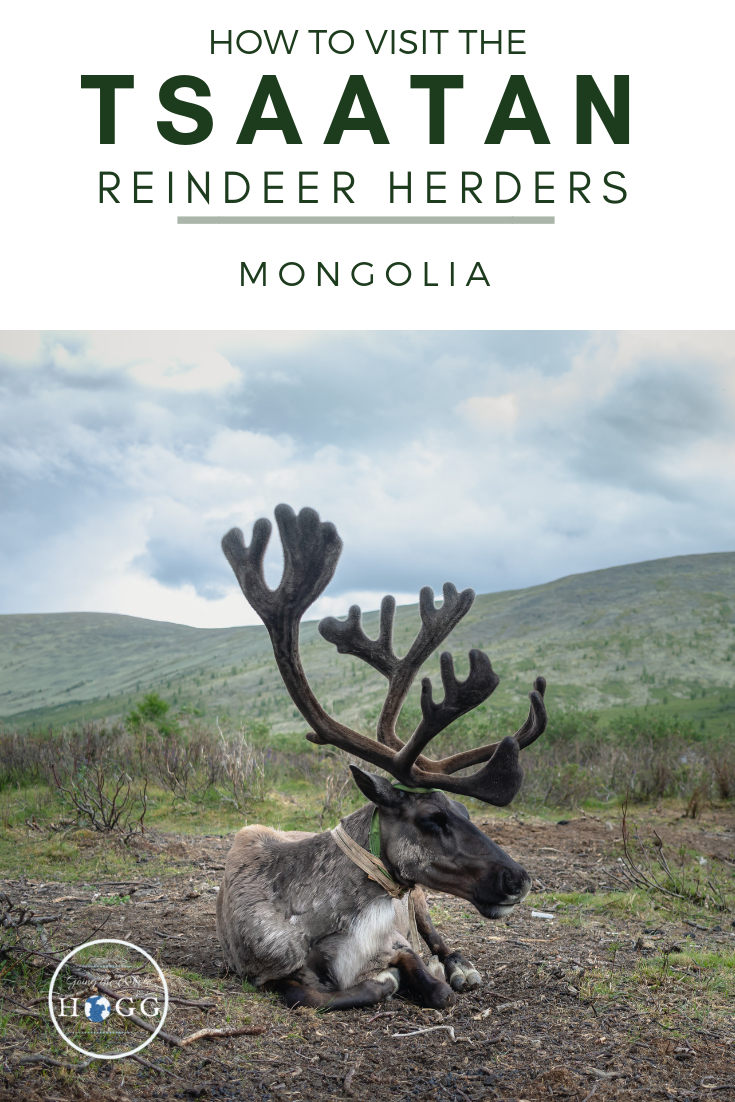 A detailed guide on how to visit the Tsaatan Reindeer Herders in northern Mongolia. When to go, who to contact, what to expect and everything you should take with you. A highlight of travel in Mongolia! #mongolia #EastAsia