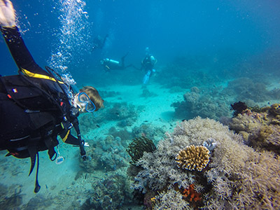 About Going the Whole Hogg: Scuba Diving at Puerto Galera