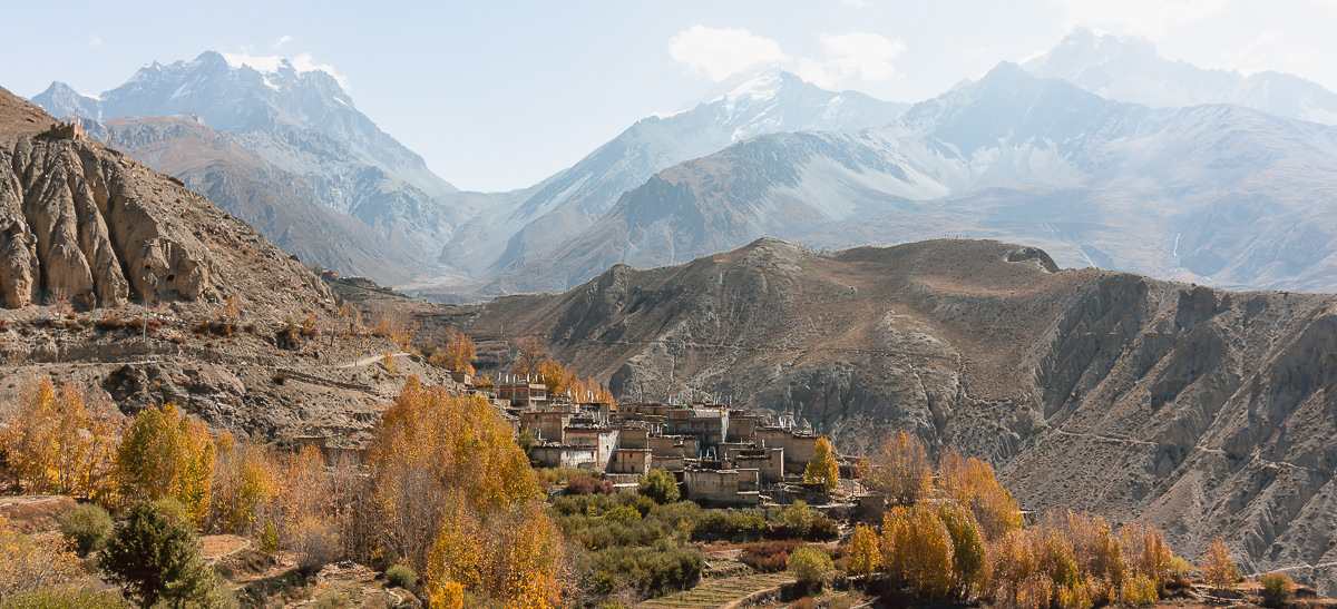 Traditional Mustang homes surrounded by trees of Autumnal yellow, the Thorong La rising behind in the distance