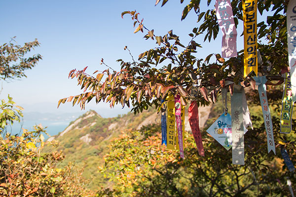 Hiking flags hanging from branches on the Saryangdo Island Ridge Hike, Tongyeong, South Korea