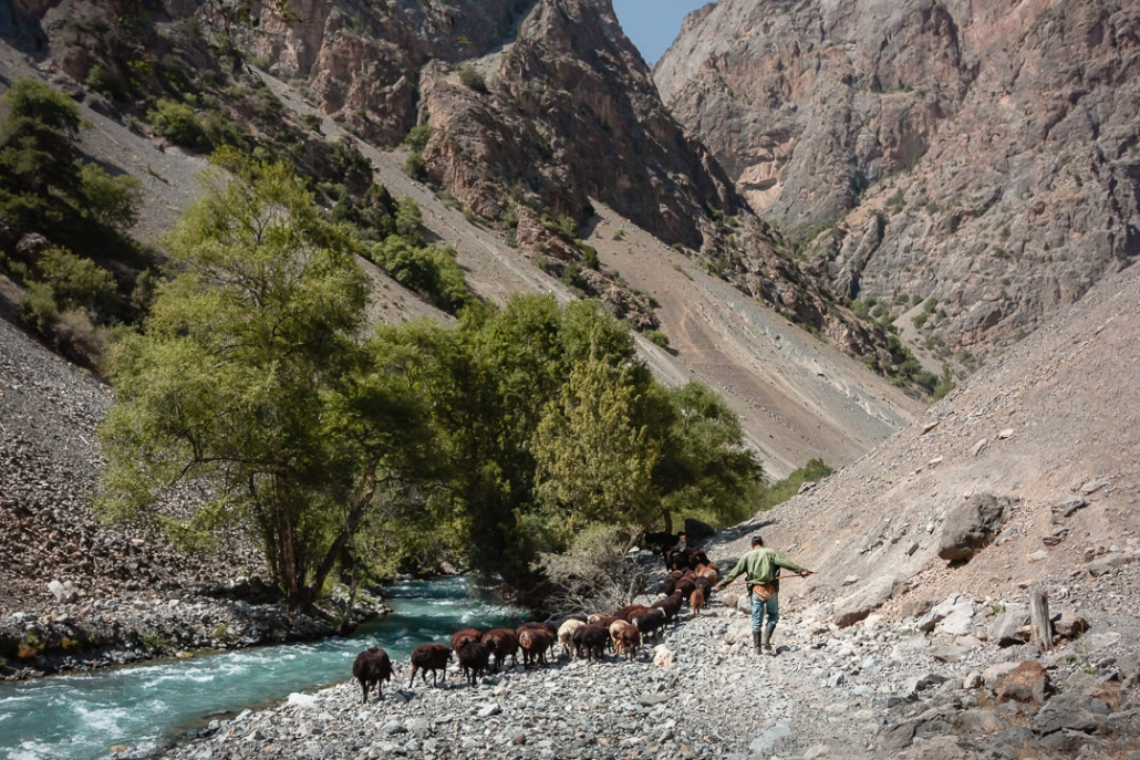 A goatherder leads his gang of goats along the stoney path next to the icy blue Sarymat River in the Fann Mountains in Tajikistan