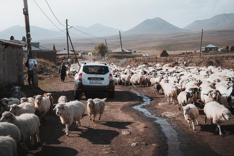 A huge flock of sheep clogs the dirt road in the village of Akhali Khulgumo on Georgia's Javakheti Plateau