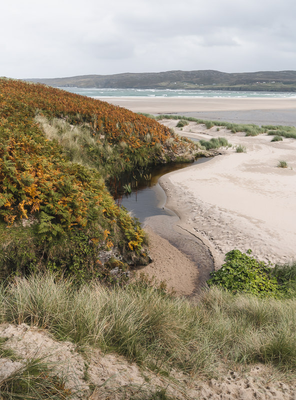 The bracken and machair covered sand dunes at Skinnet Bay near the North Coast 500 route in Scotland