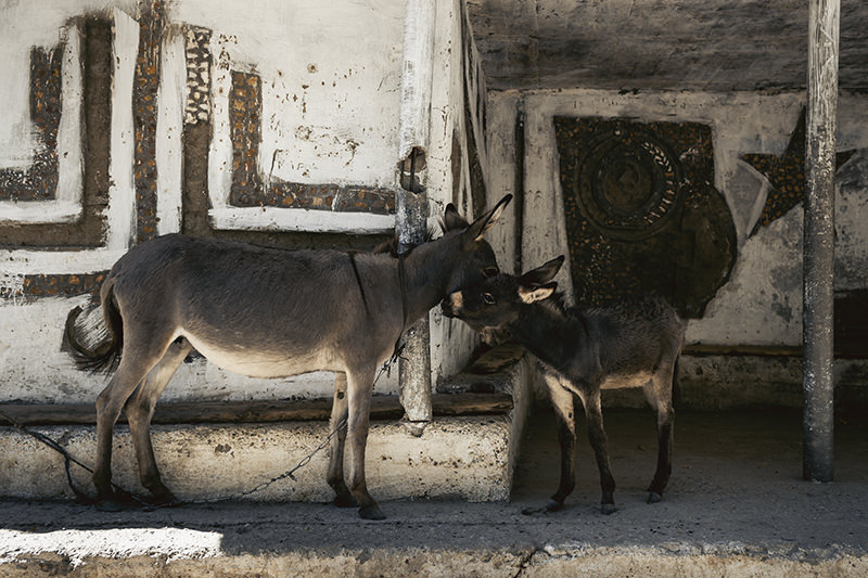 Two donkeys in front of an old Soviet bus stop, this one with prominent symbols from the 1980 Moscow Olympics