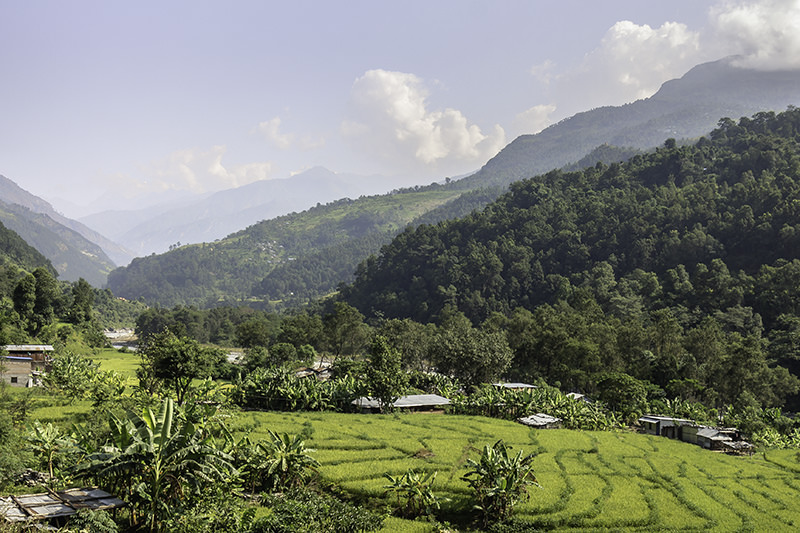 Sunny and green terraced rice fields on the banks of the Budhi Gandaki at the start of the Manaslu Circuit Trek