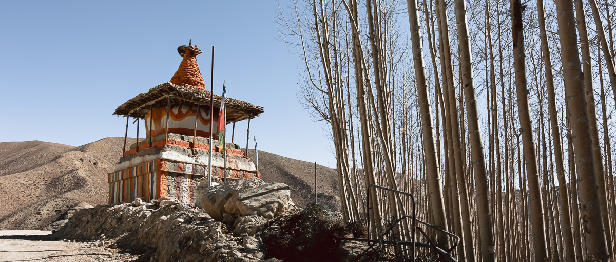 A large chorten by the roadside at Jhaite, close to a stand of tall, thin, leafless trees.