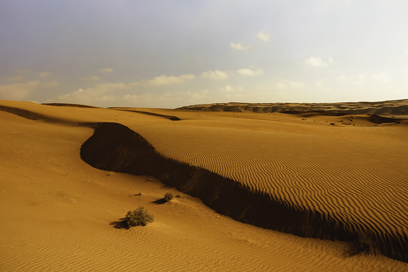 The wind sculpted red sand dunes of Wahiba Sands in Oman, as far as the eye can see