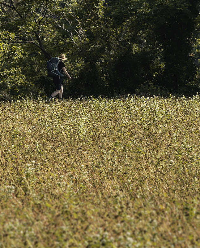 A person walking past uncultivated fields near the end of Jeju Olle Trail Route 16