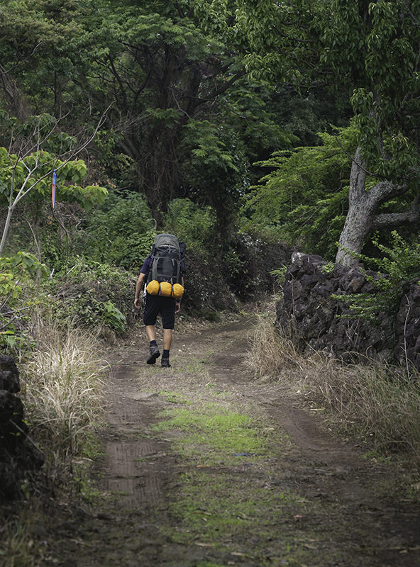 A person with a big backpack walking the forested stonewall paths outside of Nahcheon on Jeju Olle Trail Route 13