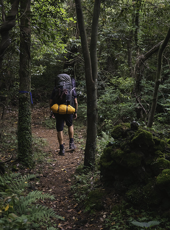 A person with a backpack walking through the Gotjawal dense forest on Jeju Olle Trail Route 14-1
