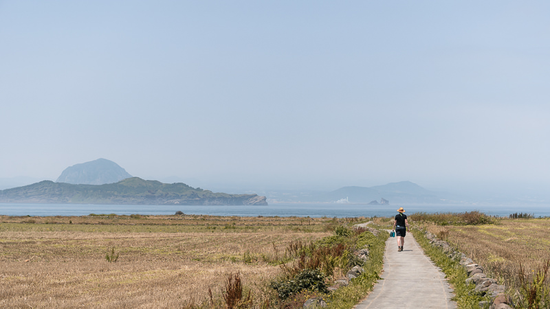 Walking through the recently harvested Gapa-do barley fields, with hazy views of Jeju Island across the channel